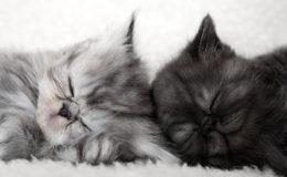 Two sleeping kittens